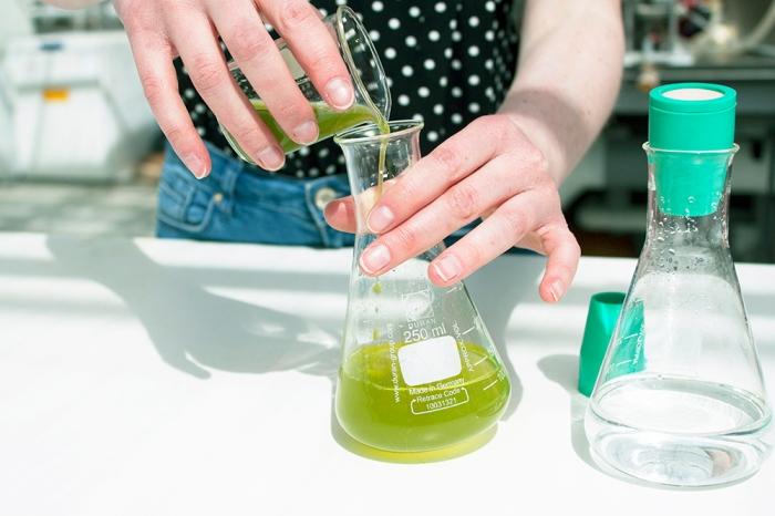 algae, algaeparc, Karlijn Sibbel, Wageningen University, laboratory, culturing, biodesign
