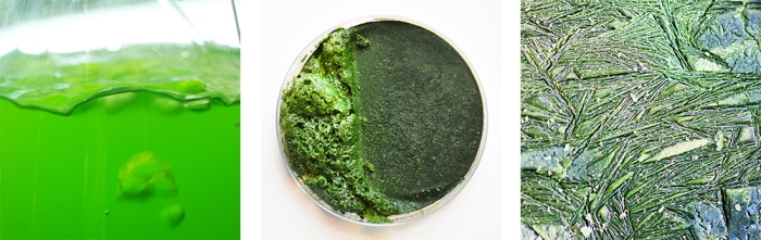 algae culture, material research, freeze dried algae pattern